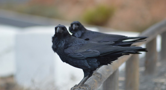 Crows? von Dave W - Lizenz: Creative Commons BY
